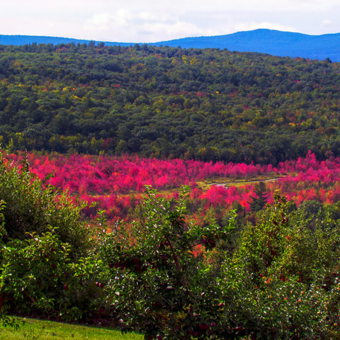 Ricker Hill Orchards, Turner, Maine (09/15/19)
