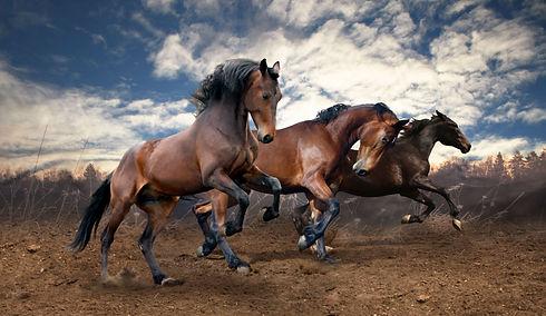 Wild horses equestrian.jpeg