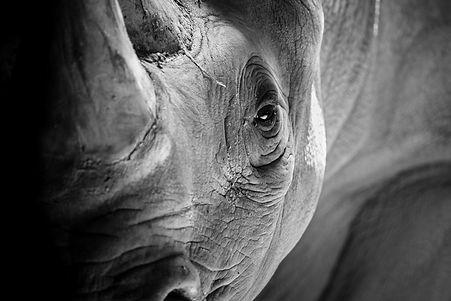 Rhino Background.jpeg