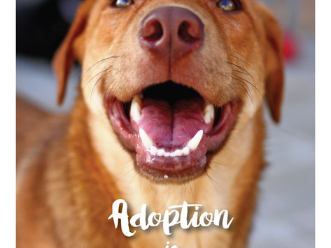 Adoption is For Life