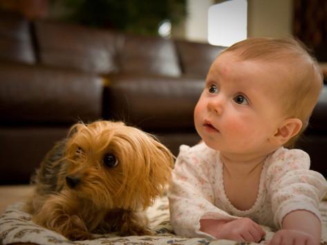 協助狗狗適應初生嬰兒