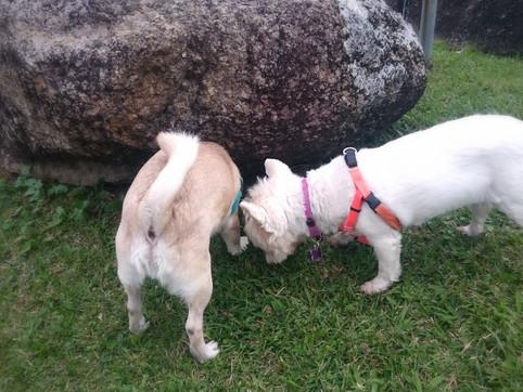 狗狗的嗅聞能力