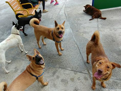狗公園使用守則