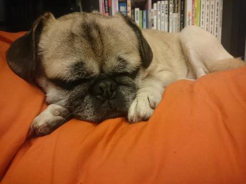 狗狗也會發夢嗎?