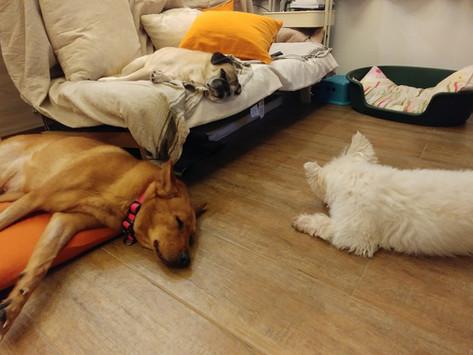 狗狗可以上床、上梳化嗎?