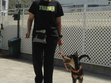 6 招改善犬隻訓練成效