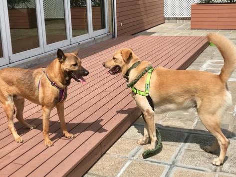 如何協助狗狗交朋友