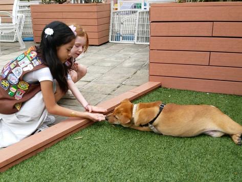 童狗做朋友
