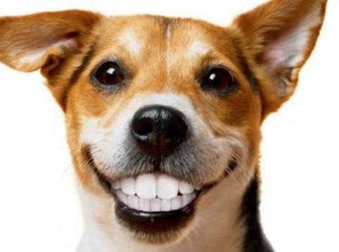 讓狗狗愛上刷牙