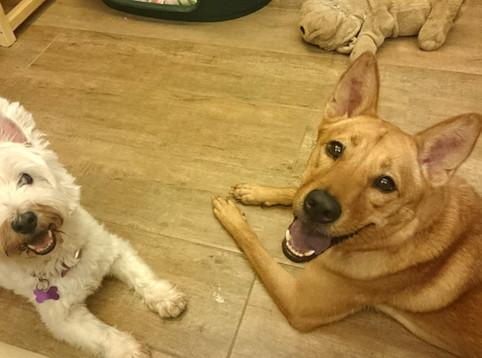 如何協助狗狗和睦共處
