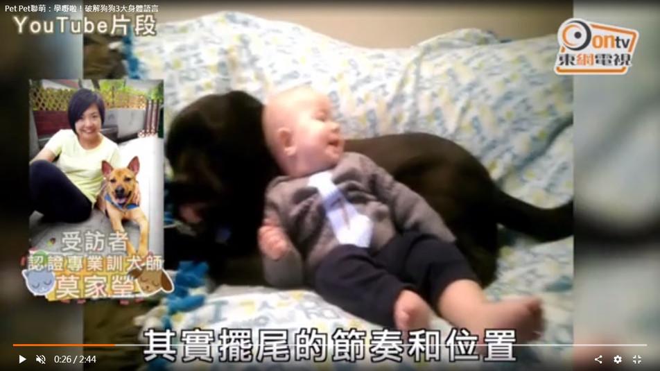 東網電視 Pet Pet 聯萌 2016