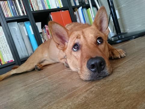 狗狗真的會報復嗎?