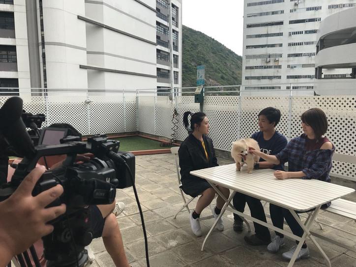 TVB 寵物大聯萌 2017