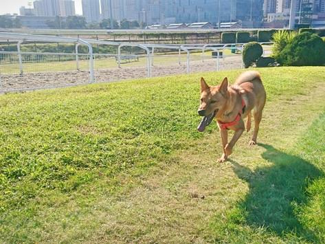 狗狗需要多少運動量