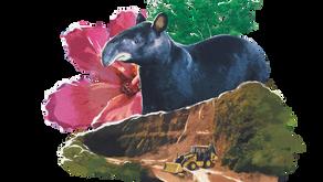 Uso sostenible, biodiversidad y servicios ecosistémicos