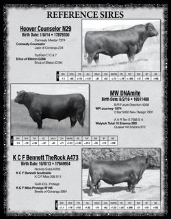 2020 Sletten Angus Catalog-4