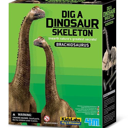 חפירת שלד דינוזאור Brachiosaurus