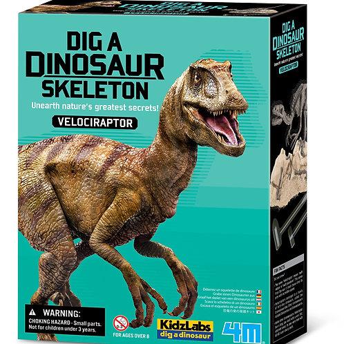 חפירת שלד דינוזאור Velociraptor