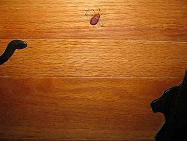 intarsia door closeup--snake, cat, bug