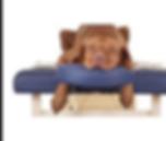 pet sitting spokane, dog sitting spokane, dog massage spokane
