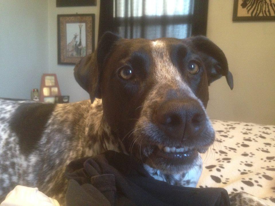 My Pup Ranger - Still Here & Still Grinning!