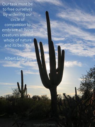 Back lit Saguaro with Einstein quote