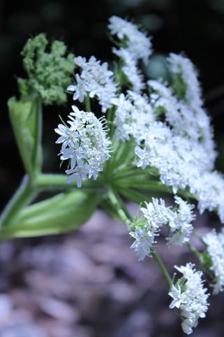 WHITE SPRAY OF FLOWERS