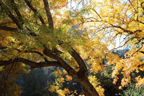 Leaning yellow tree framed in sunlight