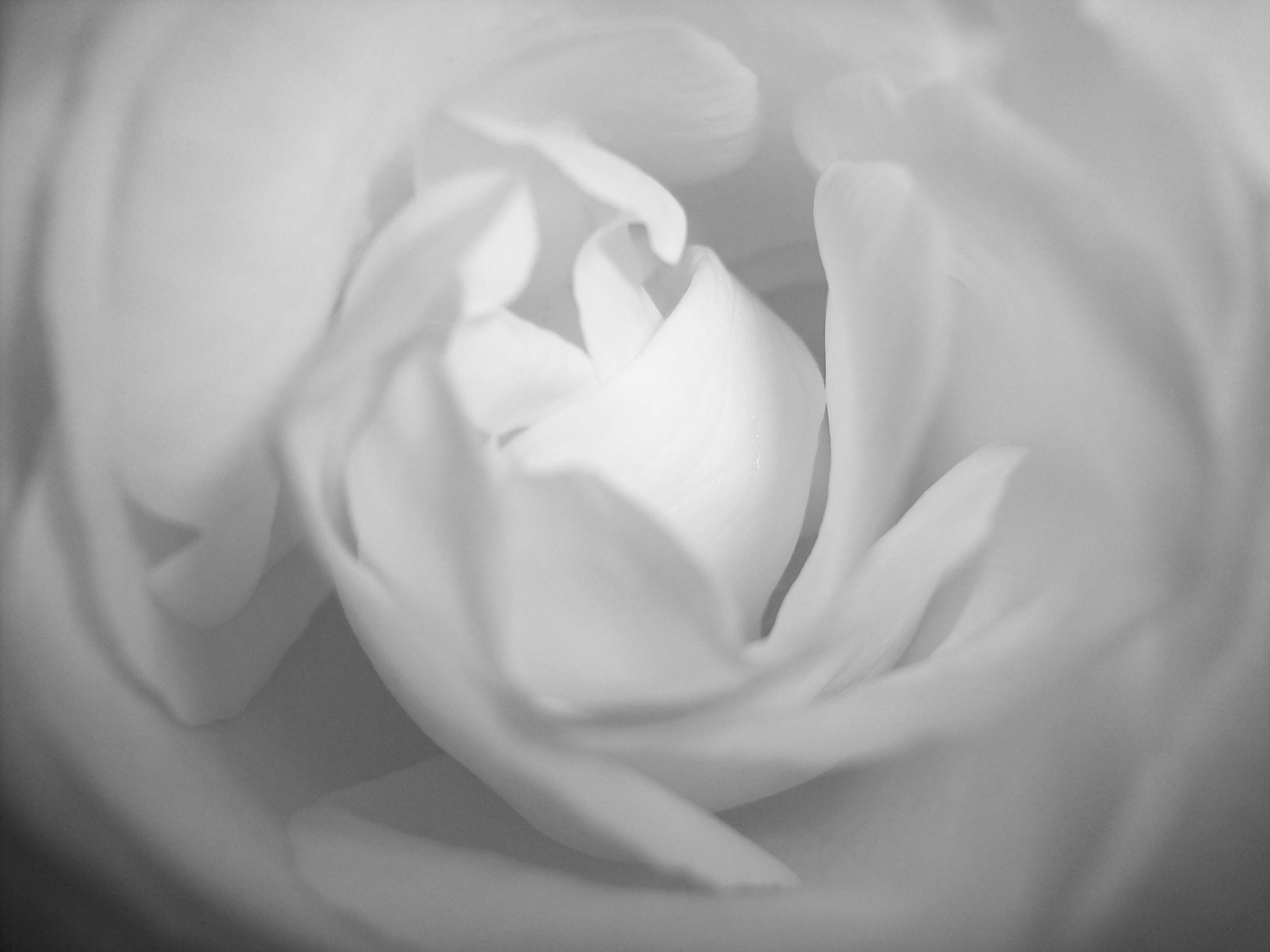 Heart Healings aromatherapy