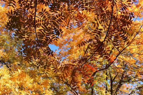 Leaf vibrations