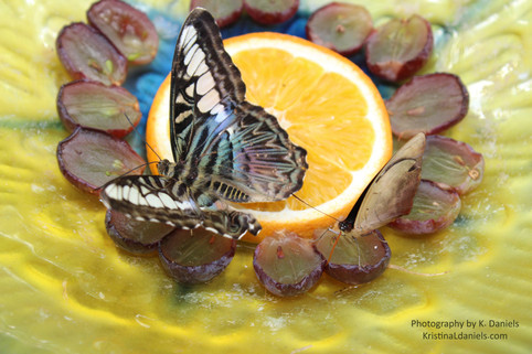 tucson butterfly garden