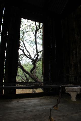 Window view of tree
