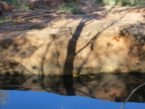 Shadow of a tree on water and rock