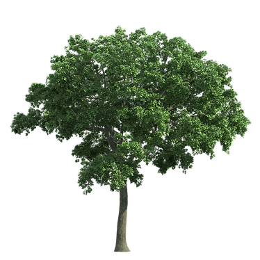 Tree Home Page.png