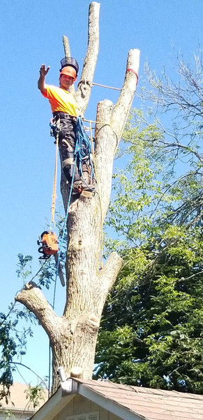 Cory up tree.jpg