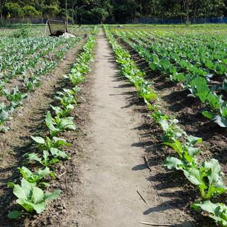 Organic Farming Experience