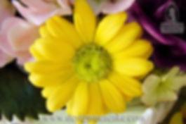 Gumpaste Daisy Flower