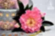 Sugar Peonies Flowers
