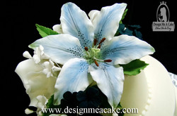 Blue Stargazer Lily