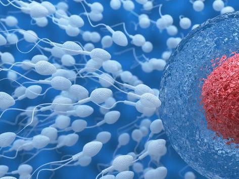 """El descenso del número de espermatozoides """"amenaza la supervivencia humana"""""""