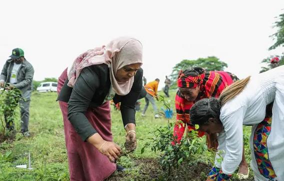 Etiopía, plantación masiva
