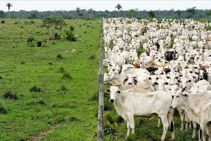 La ganadería es la actividad que más presiona a la desforestación y emite gran cantidad de gases de efecto invernadero