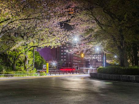 今年最後の夜桜