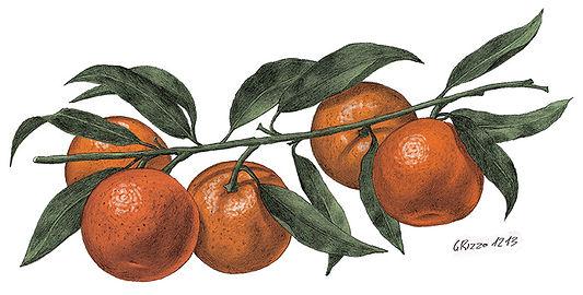 Clementine LR.jpg