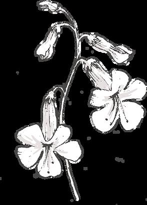 Botanicals_texture-37.png