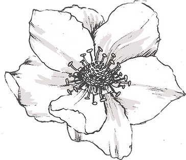 Botanicals_texture-22.png