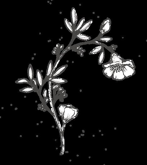 Botanicals_texture-35_edited.png
