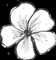 Botanicals_texture-12.png