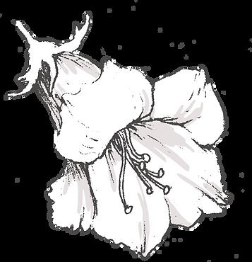 Botanicals_texture-21_edited.png