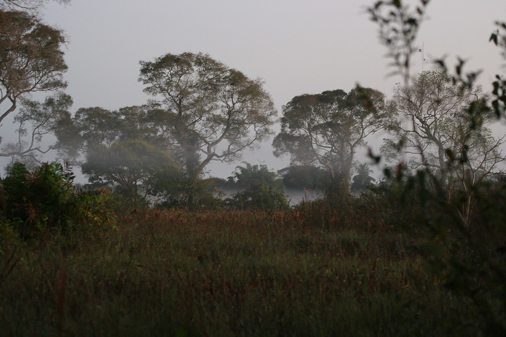 Early morning on the Pantanal